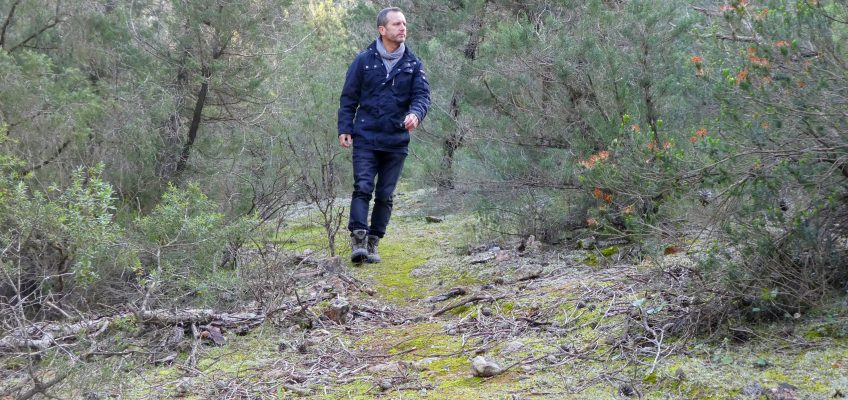 Shinrin-yoku o Terapia del Bosque